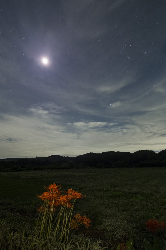 曼珠沙華と昇る冬の星座
