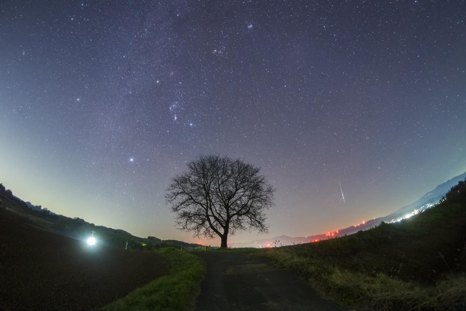 くるみの木とおうし座流星群
