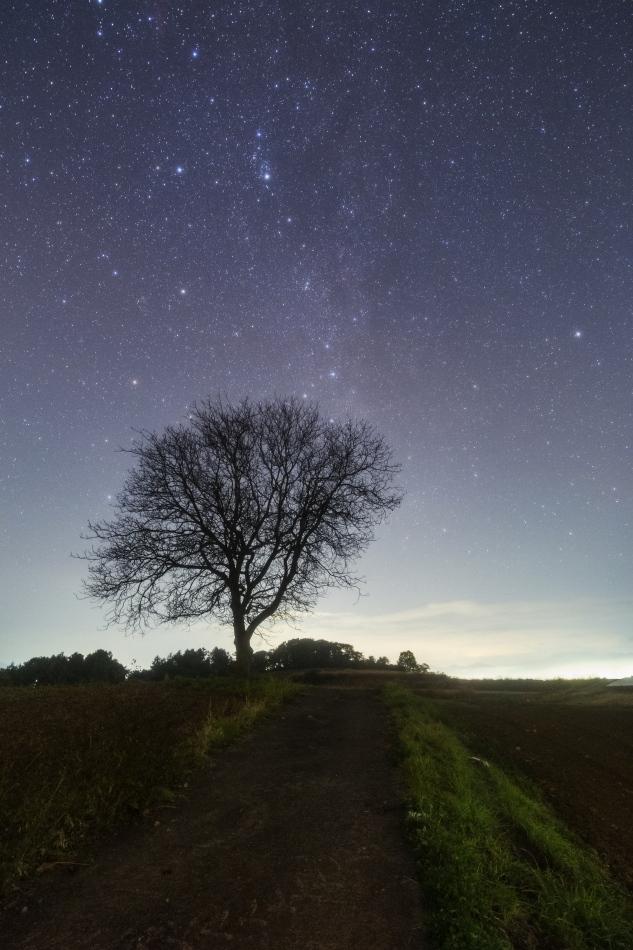 くるみの木と北天の星々