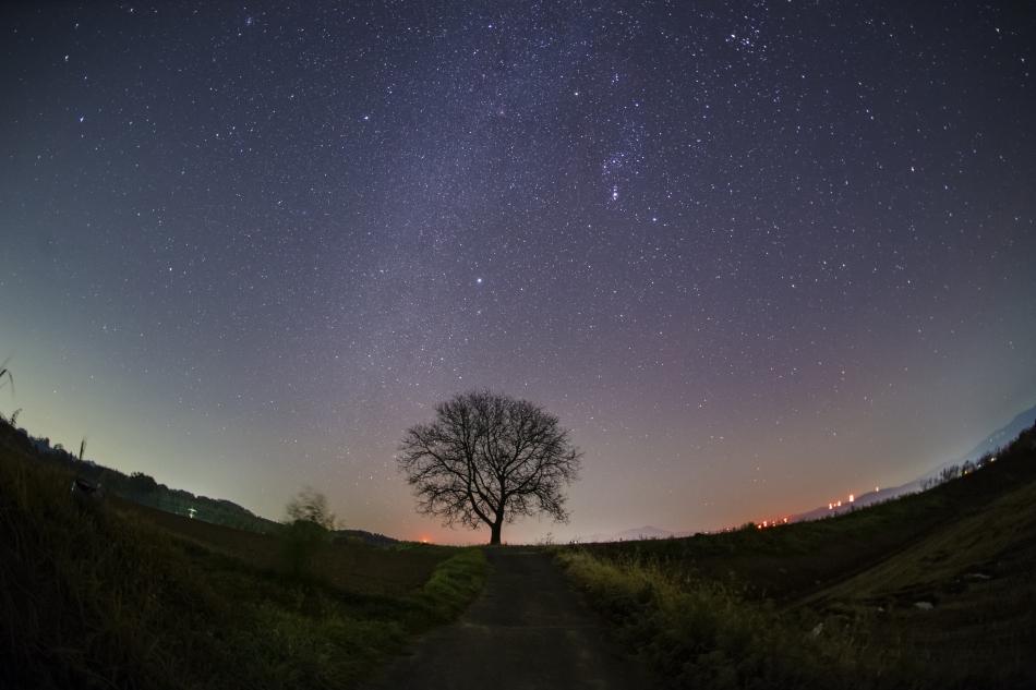 くるみの木と冬の星空
