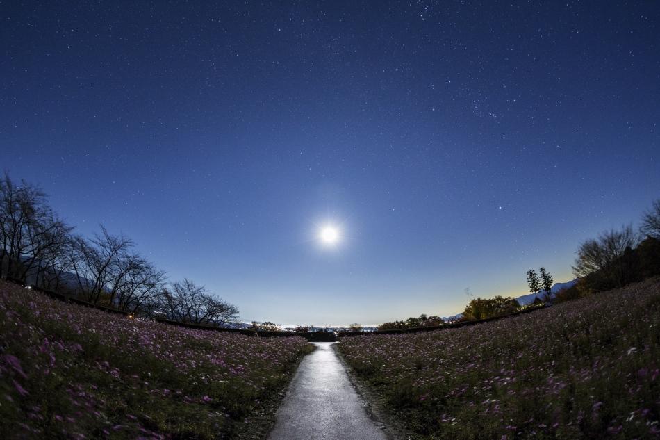 コスモス畑と昇る月・冬の星座