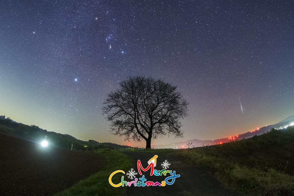 くるみの木と流れ星