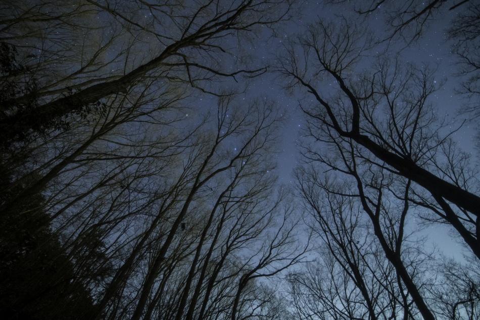 森と北斗七星