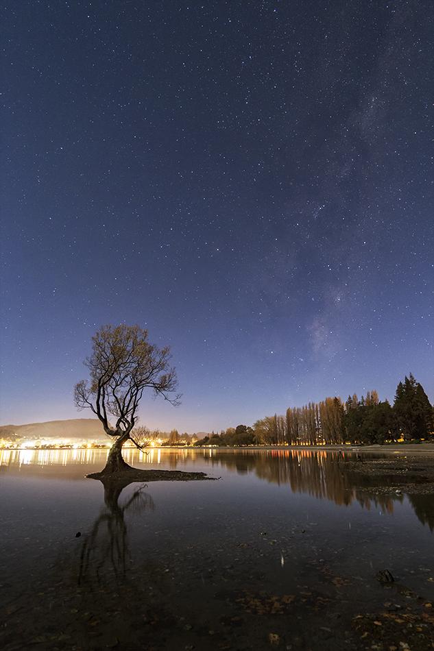 ワナカ湖の1本木と昇るさそり座