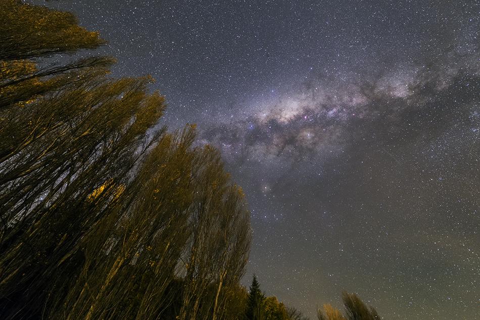 ポプラ並木と天の川