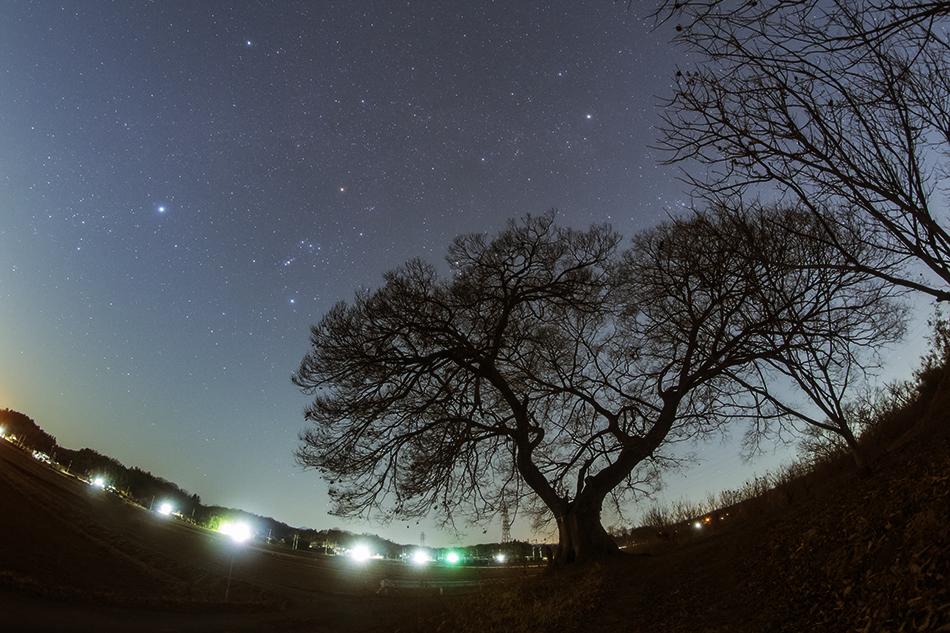 魚眼レンズによる熊谷の大エノキとオリオン座