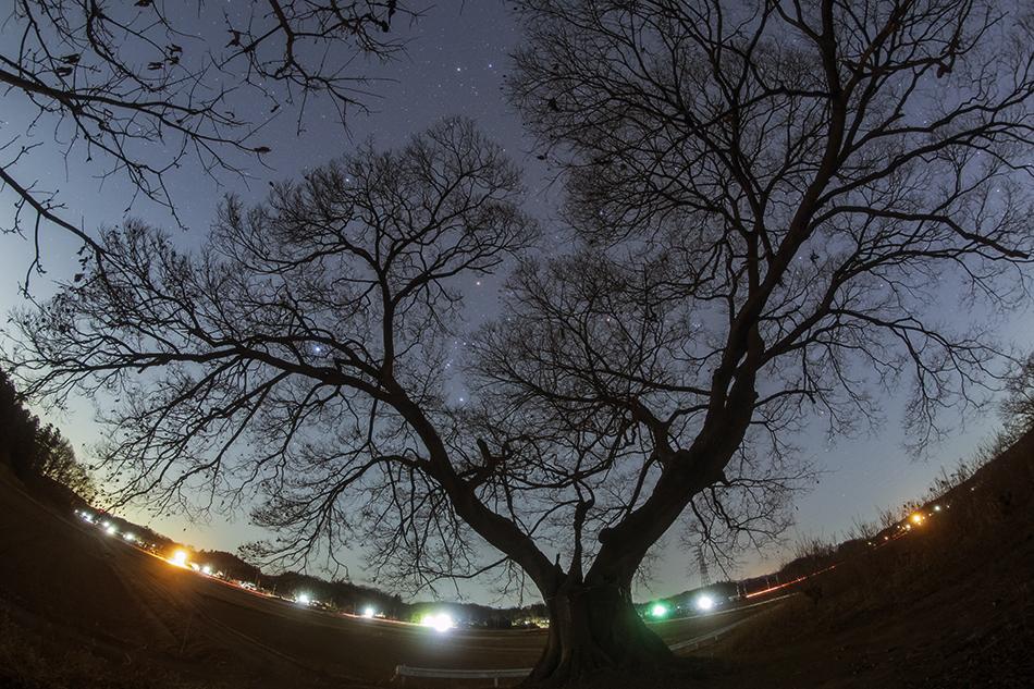 魚眼レンズによる熊谷の大エノキと冬の大三角