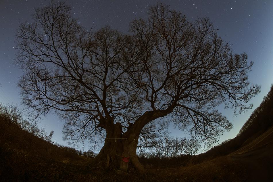 魚眼レンズによる熊谷の大エノキと星空