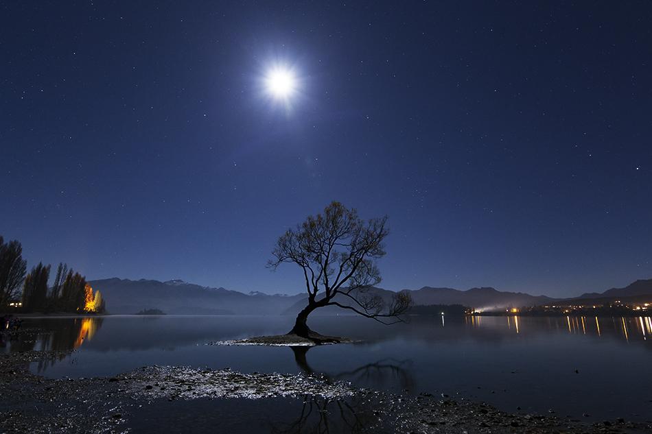 ワナカ湖の1本木と月