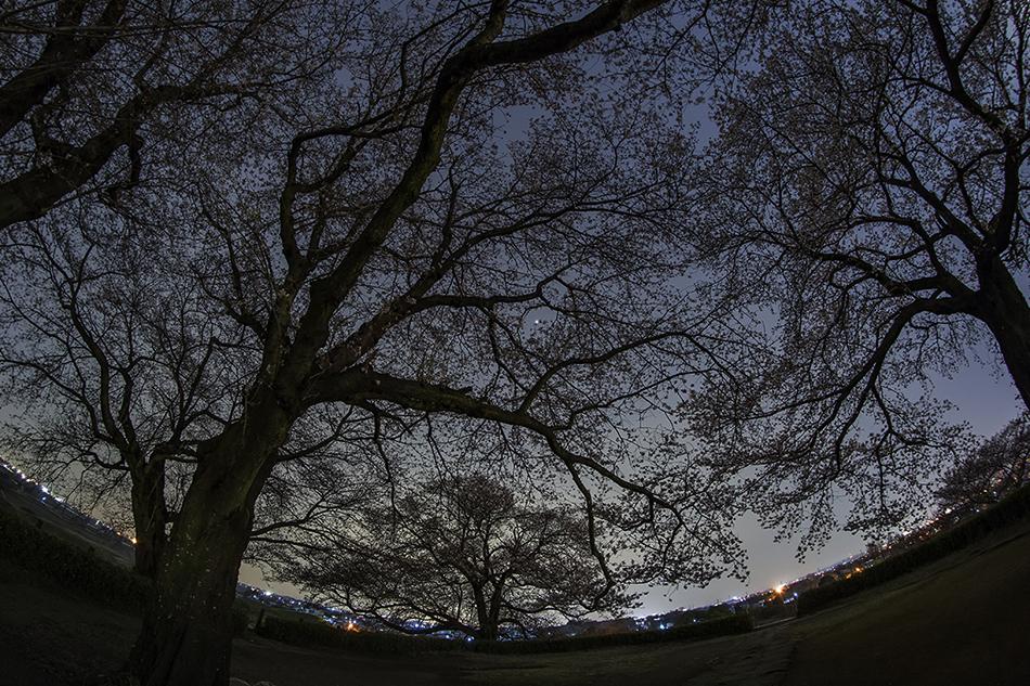 丸墓山古墳の桜と木星
