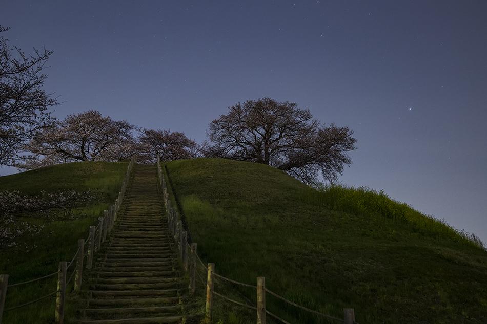 丸墓山古墳の桜と昇ること座