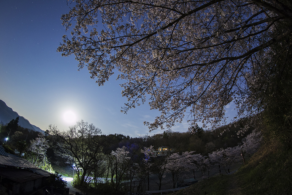 長瀞野土山の桜と月、木星