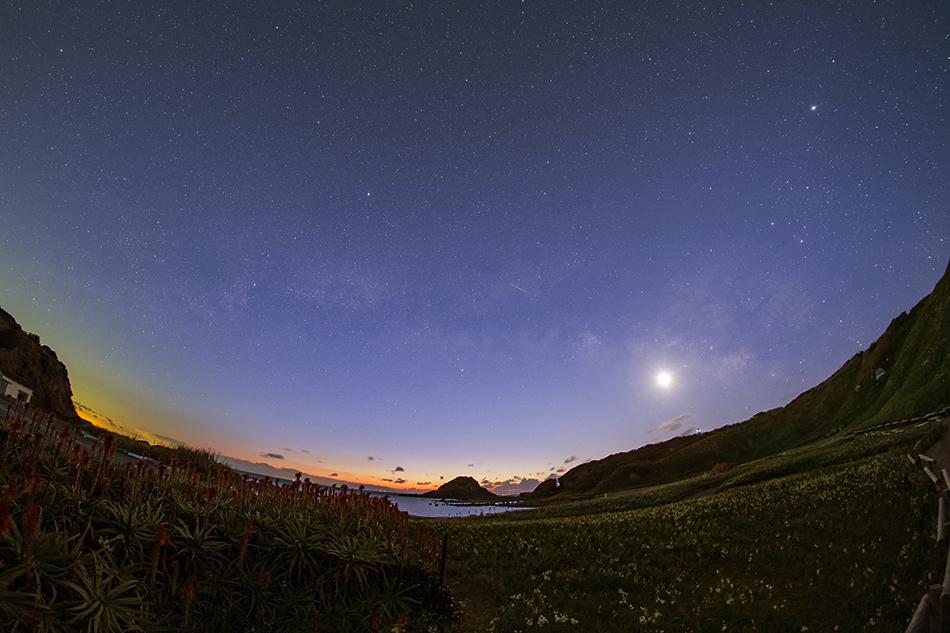 爪木崎のアロエ・水仙と夜明けの天の川