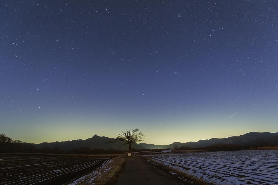 やまなしの木と昇る北斗七星・しし座