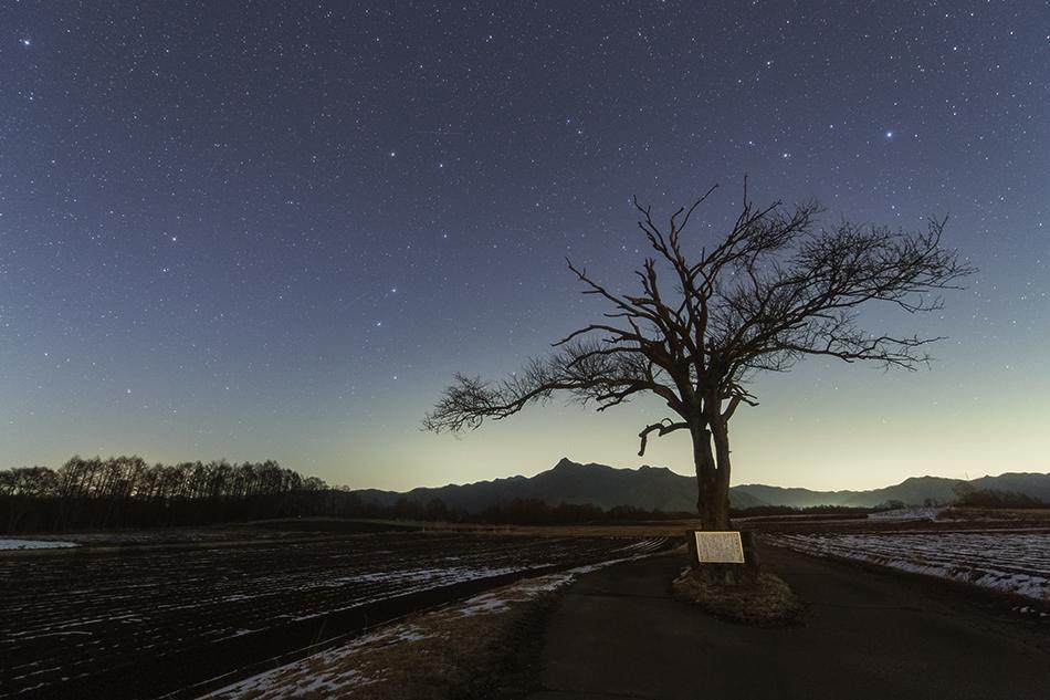 やまなしの木と北斗七星