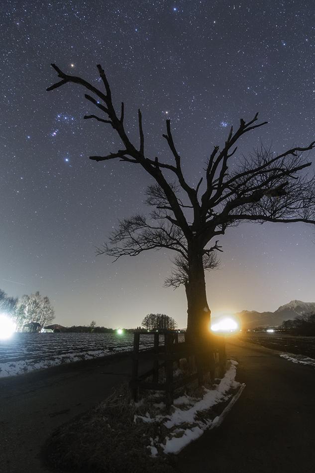 やまなしの木とオリオン座
