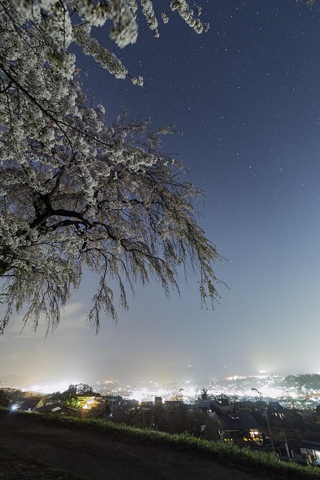 下川田のしだれ桜と北斗七星