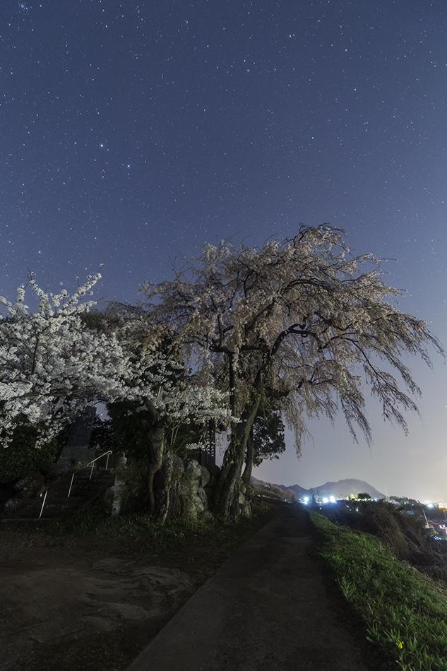 下川田のしだれ桜とふたご座