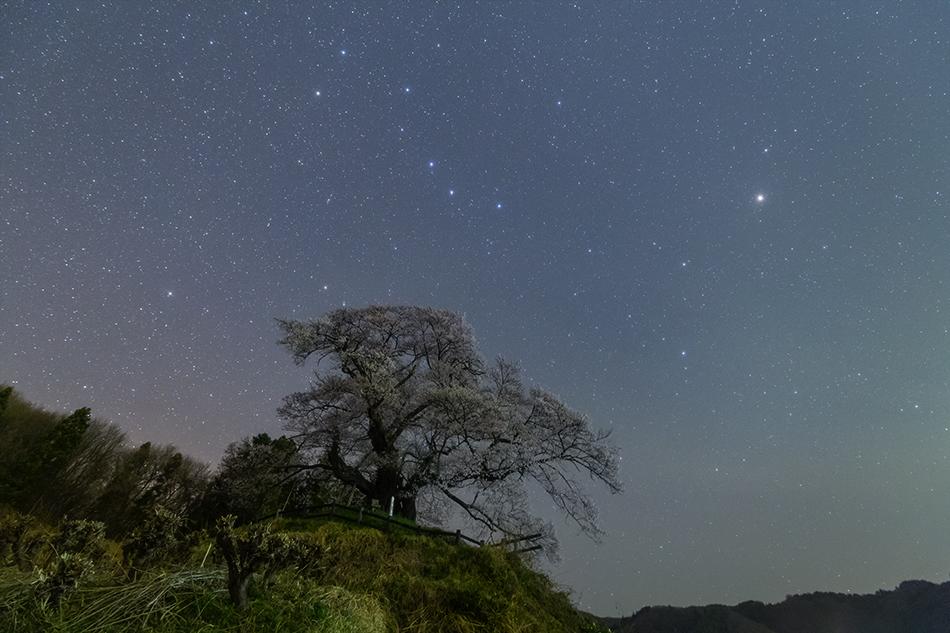 発地の桜と北斗七星