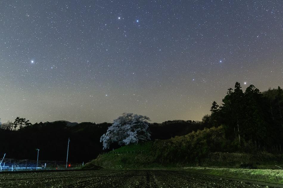 発地の桜と沈むふたご座
