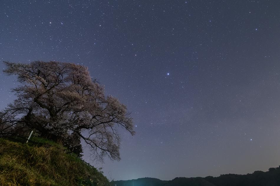 発地の桜と昇る夏の大三角