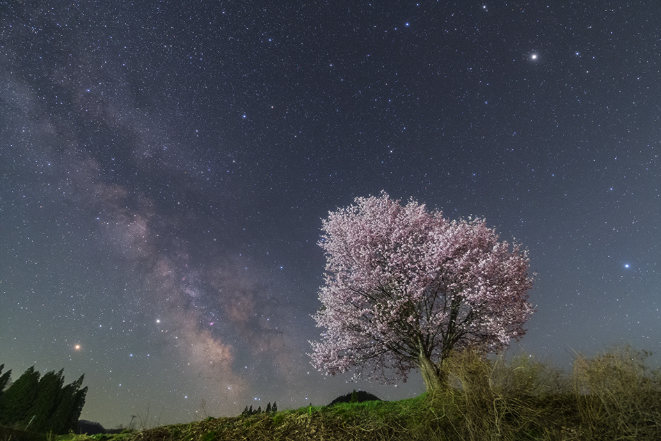 野平の桜と星空