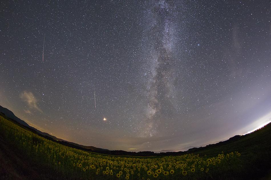ひまわり畑とペルセウス座流星群