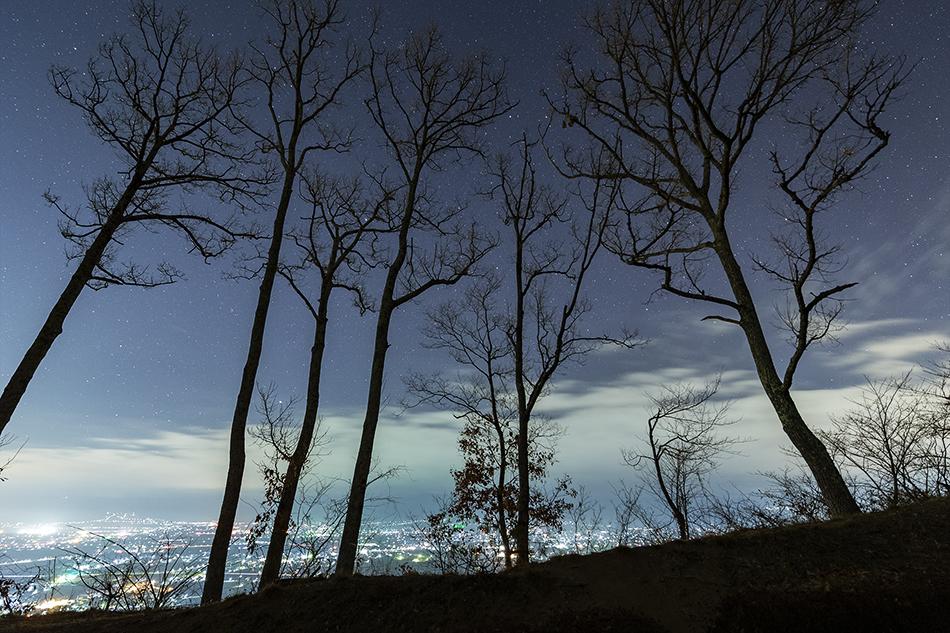 アルプス公園の木々と沈む冬の星座