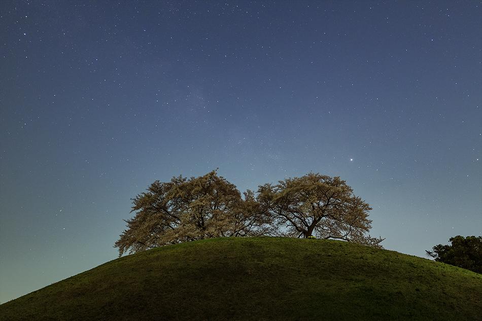 丸墓山古墳の桜と天の川