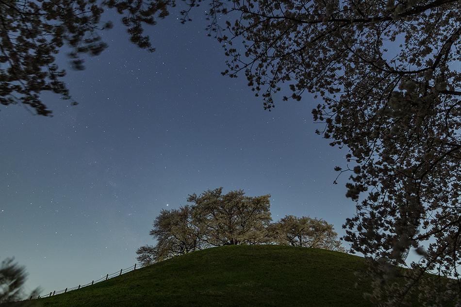丸墓山古墳の桜といて座の天の川