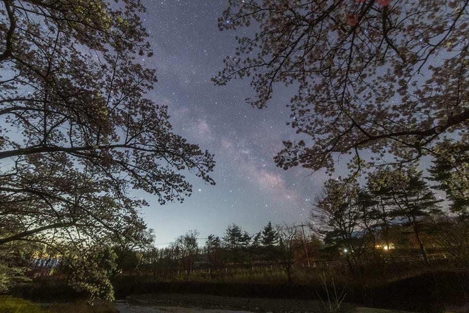 桜といて座の天の川  Canon6D HKIR改