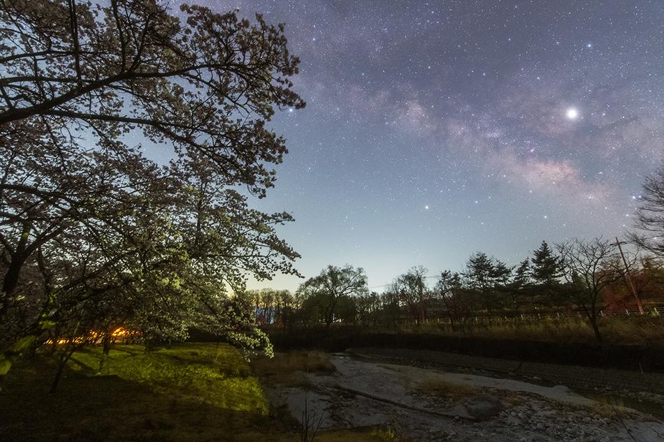 北杜市の桜といて座の天の川