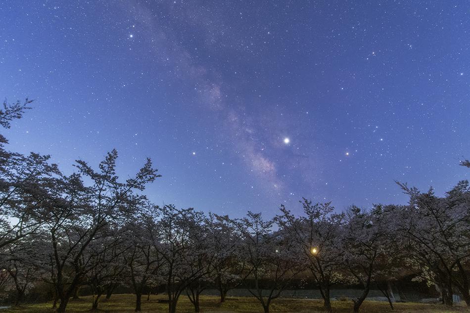 薄明の桜といて座の天の川