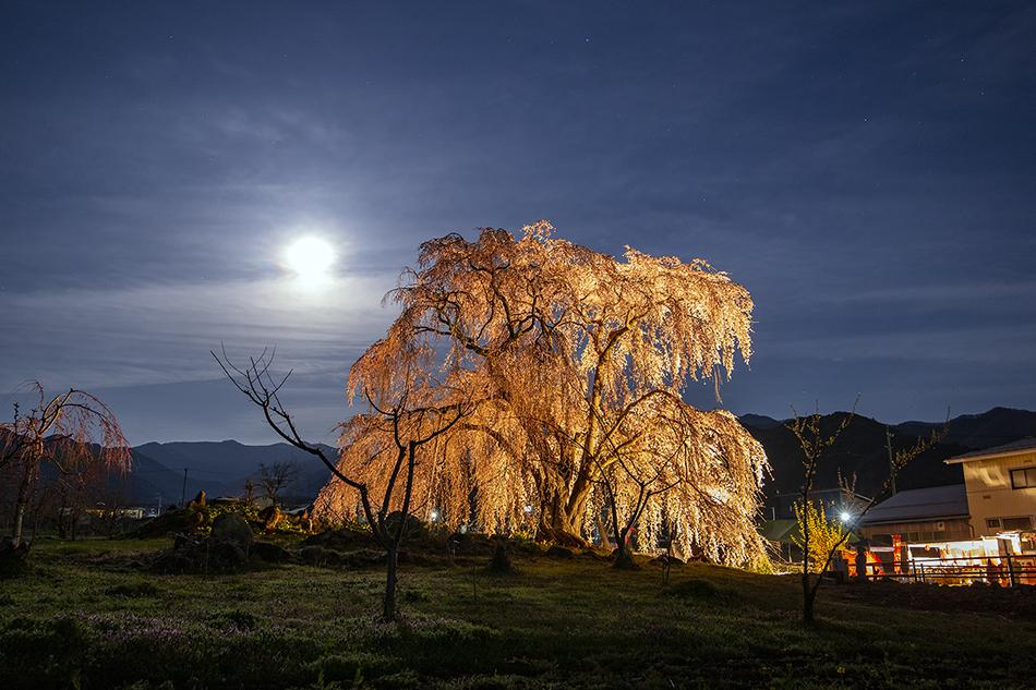 和美の桜と月