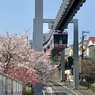 湘南モノレール 桜