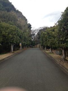掛川市の道.JPG