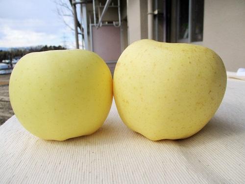 青森県産 金星 でっかい。 そしてほのかな酸味で美味しい!