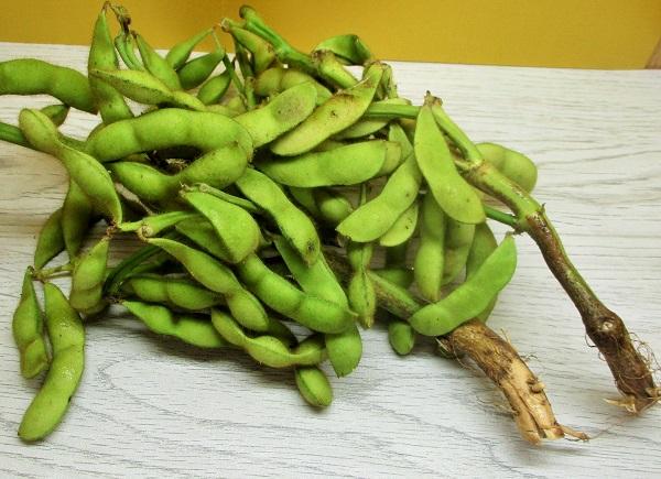 京野菜 洛市 枝付き黒枝豆 OKで購入。