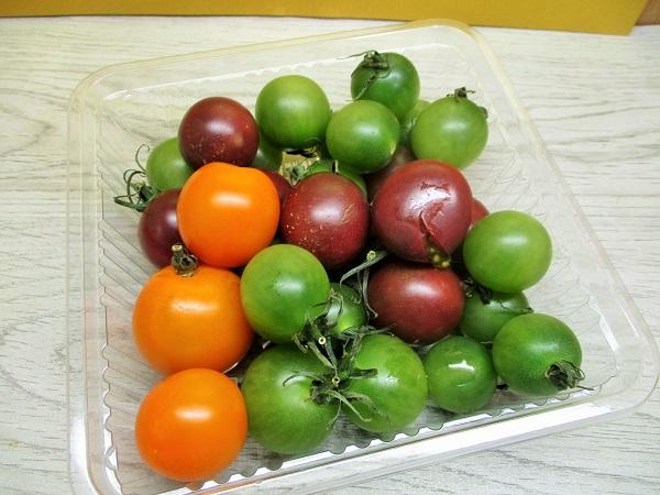 熊本県産カラフルミニトマト