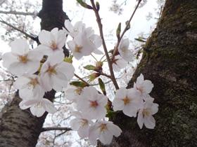 かっぱ花見4.JPG