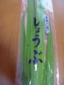 菖蒲湯1.JPG