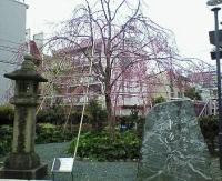 後醍醐天皇車返しの桜