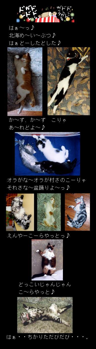北海猫盆踊り