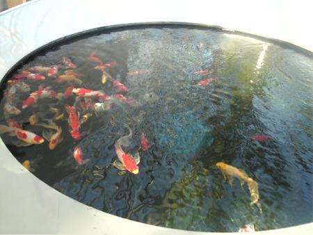 「環境水族館」アクアマリンふくしま