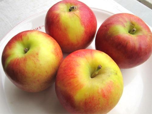 ニュージーランド産 りんご ジャズ