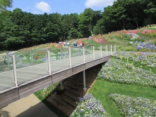 第33回 全国都市緑化よこはまフェア 里山ガーデン 横浜の花で彩る大花壇