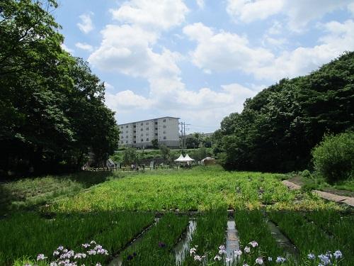 第33回 全国都市緑化よこはまフェア 里山ガーデン 谷戸のカキツバタ園
