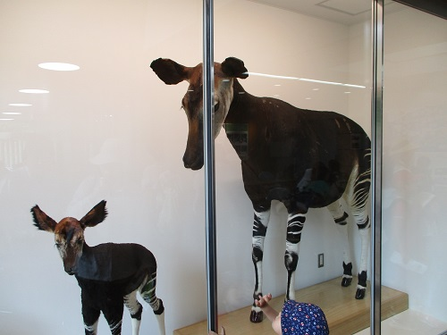 よこはま動物園ズーラシア アマゾンセンター