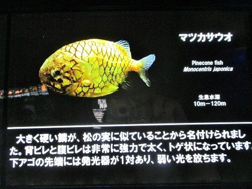 沼津港深海水族館 シーラカンス・ミュージアム 2017