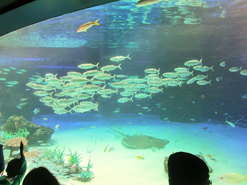 サンシャイン水族館2017